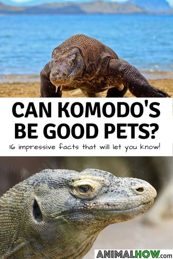 Komodo Pinterest Pin