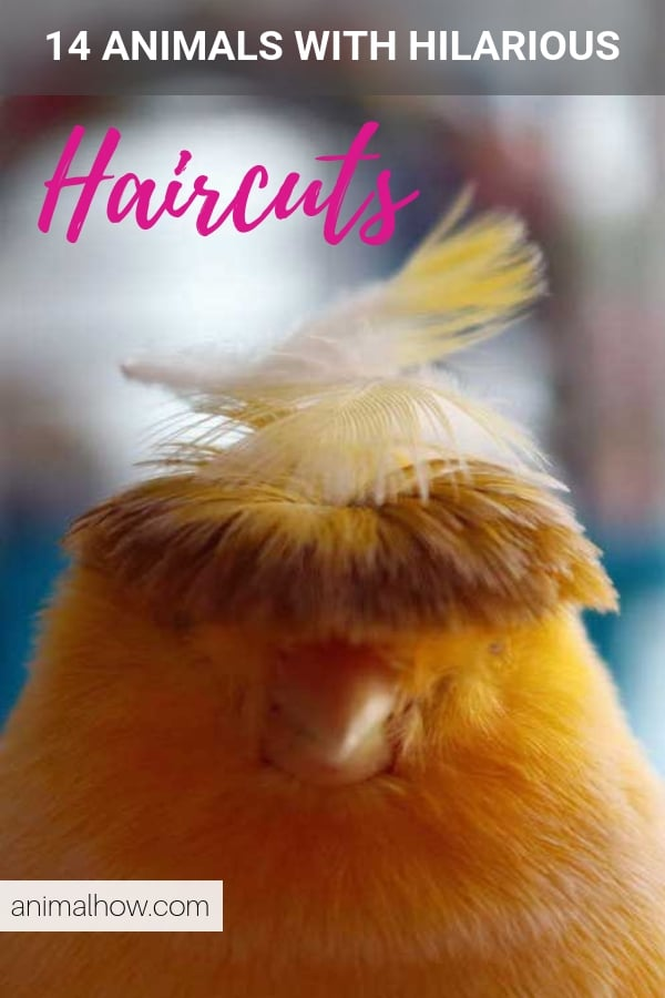 Bird with really crazy haircut