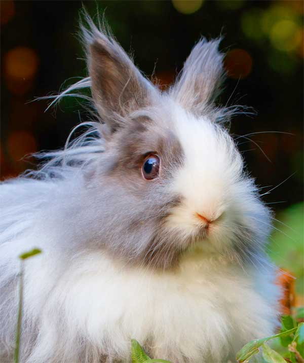 Furry and super-cute rabbit with big eyes