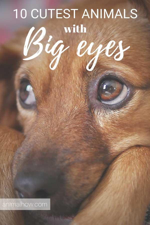 adorable dog eyes staring at you