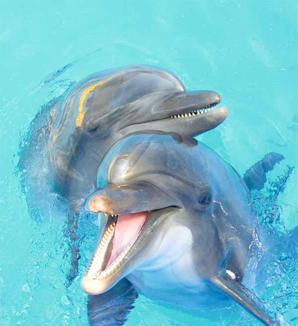 Dolphins have the best memory among animals