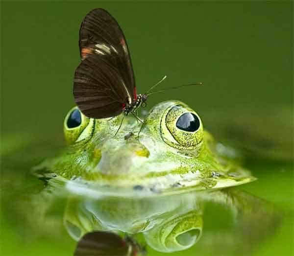Frog with green eyes