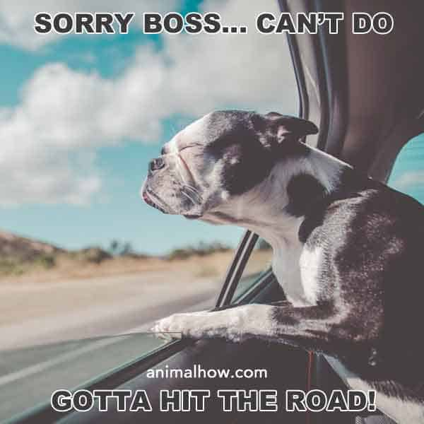 Sorry Boss, can't do. Gotta hit the road