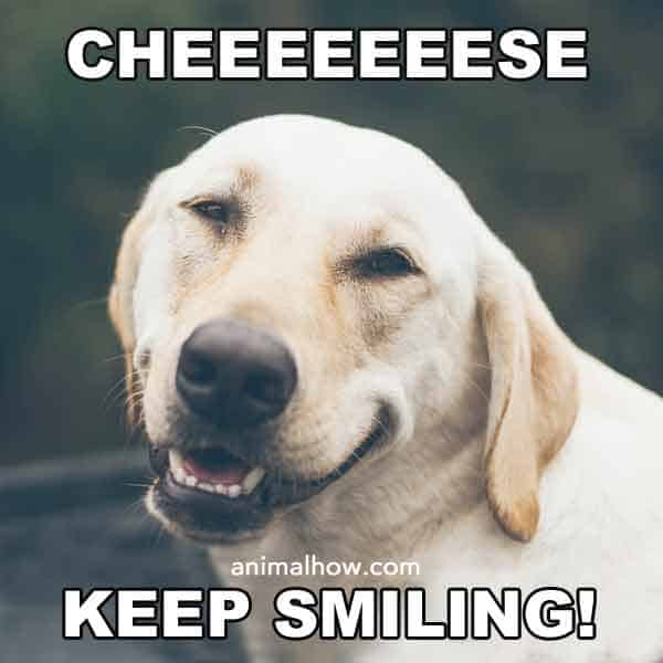 Cheese, keep smiling dog