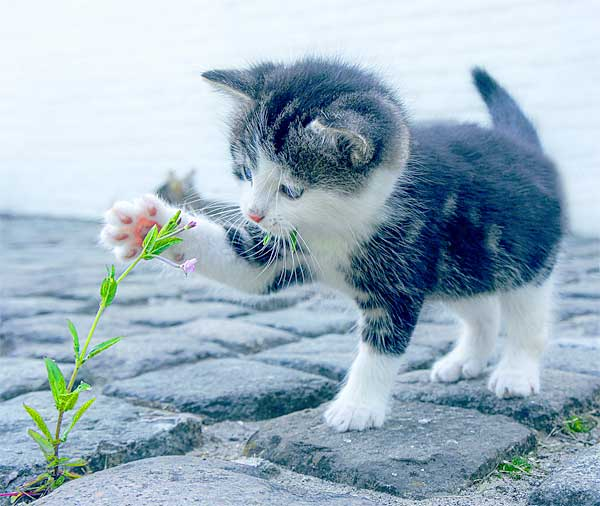 Cute little kitten playing with a plant