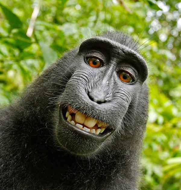 Smiling monkey with less hair