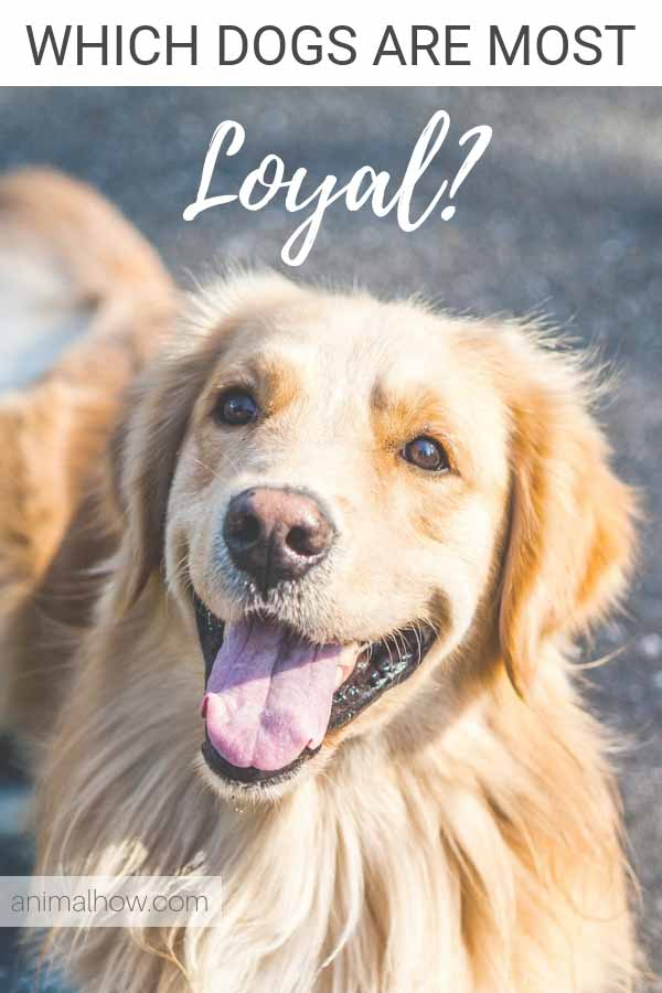 The most loyal dogs in the world