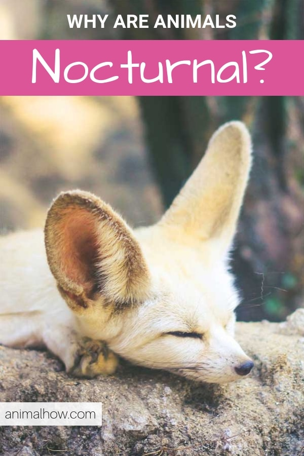 Nocturnal animals that sleep during the day and stay awake during the day