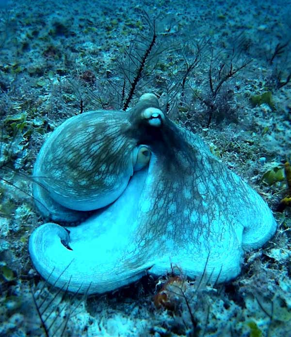 Squid hiding between sea plants and green colored sea creatures
