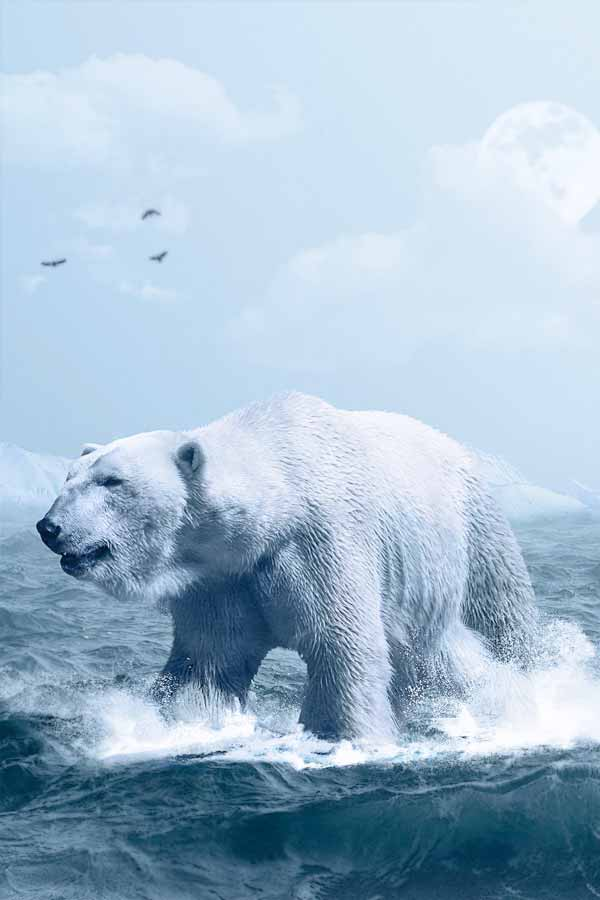 Polar bear hunting in water being hard to spot because of the white colors