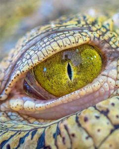 Reptile eye from the rainforest yellow and deep
