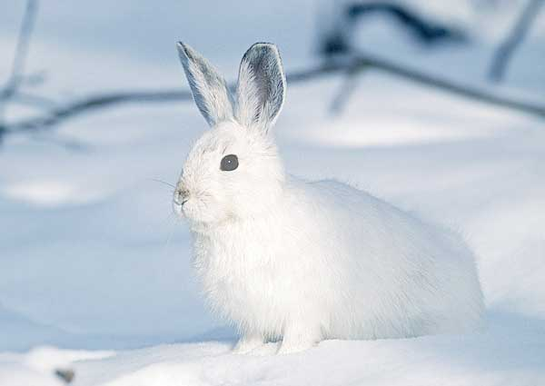 White Rabbit being invisible in showy landscape