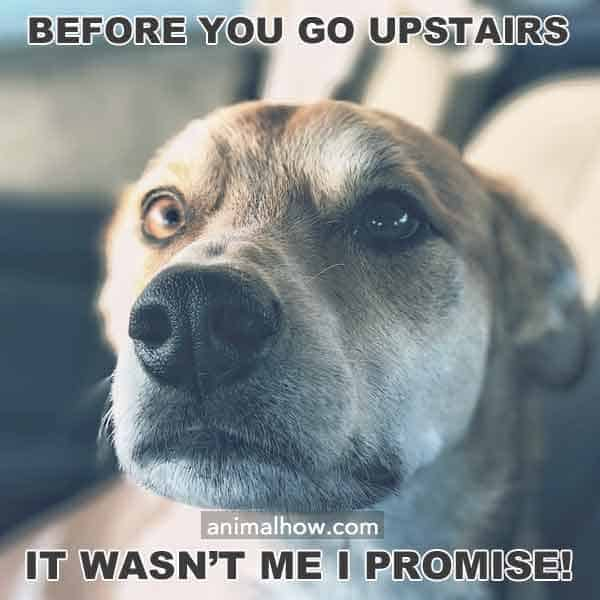 Before you go upstairs, it wasn't me!