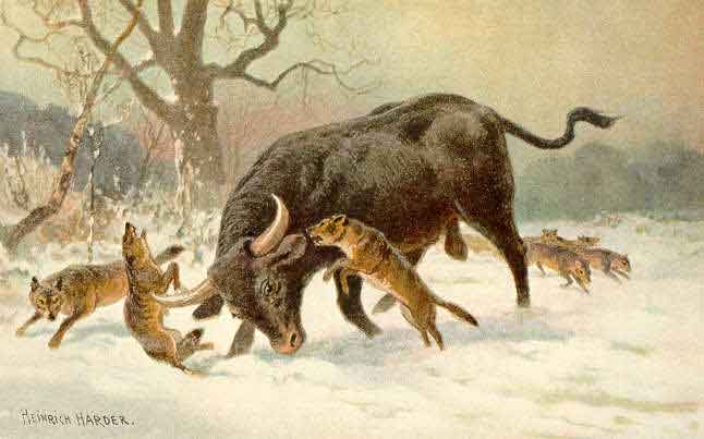 Aurochs cattle (now extinct)