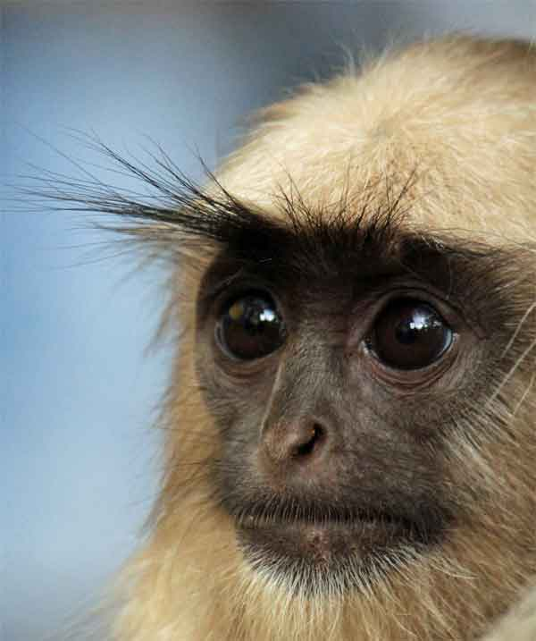 Monkey with really dark eyes