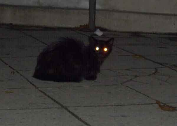 Cat with glowing yellow eyes at night