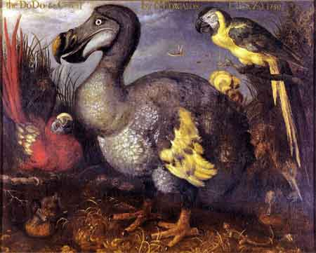 The Dodo (an extinct bird)
