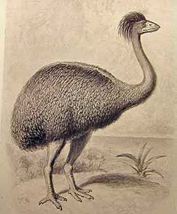 Elephant Birds (now extinct) from Madagascar