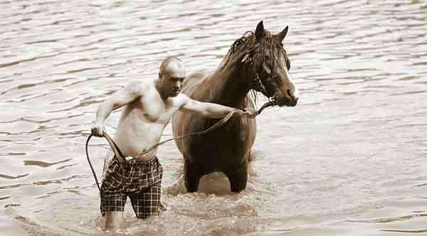 Horse learning how to swim in shallow water