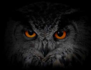 Owl with red glowing eyes at night in tree