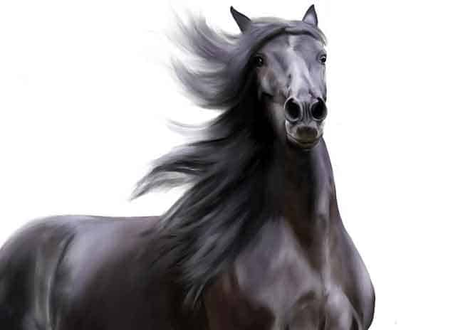 Black horse name ideas A-Z
