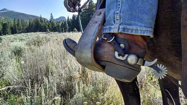 Do horse spurs hurt the horse?