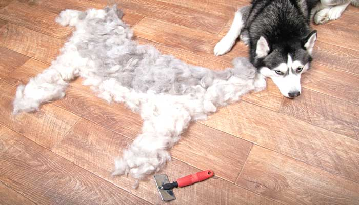 Too much shedding