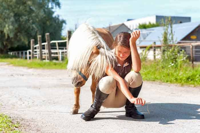 Miniature horse with kid