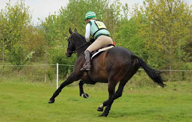 Stopping a horse from gallop speed
